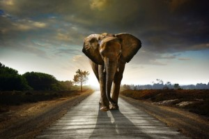 African-Elephant-on-the-Road-537x357