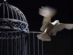 flying+bird+out+of+its+cage+the+best+for+the+post