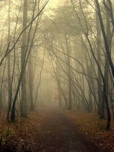 Misty path thru the woods
