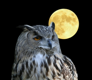 A photo of an owl