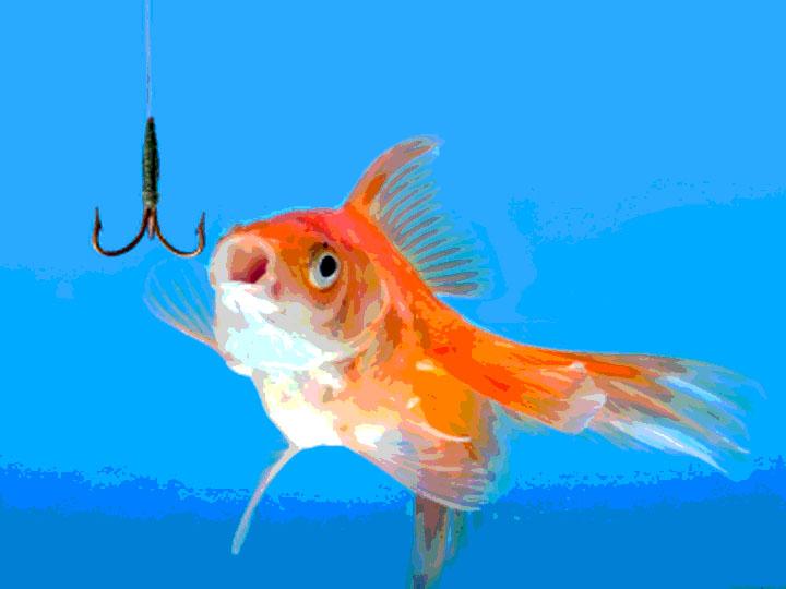 Don t take the bait